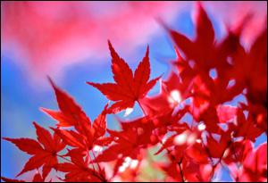 autumn-thumbnail